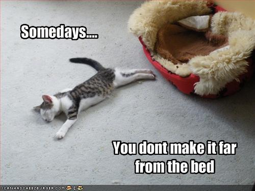 Cute animals with sayings